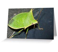 Leaf-like bug Greeting Card