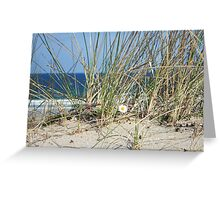 Daisy on a Sand Dune - Western Isles, Scotland Greeting Card