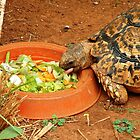 Torti, the Tortoise by Maree  Clarkson