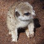 Baby Meerkat Goes Digging by Margaret Saheed