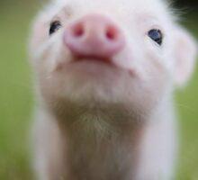Cute Baby Pig Sticker
