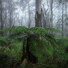In The Mist - Mount Wilson NSW - The HDR Experience by Philip Johnson