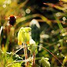 Busy bee by lorrainem
