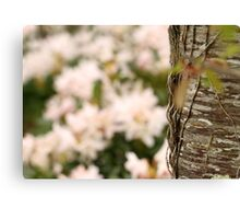 Woodland Blossoms Canvas Print