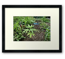 Mmm... Smells good! Framed Print