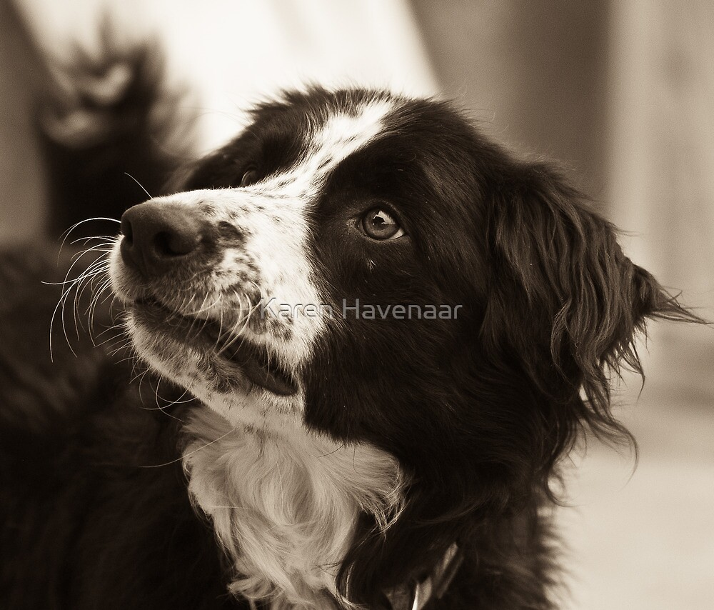 Rocco  by Karen Havenaar
