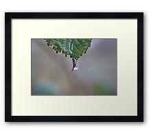 Leaf Droplet Framed Print