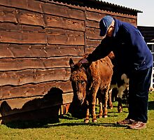 Stroking Donkey in Sanctuary by krishaynes