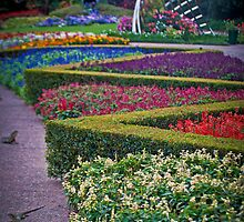 Rainbow of flowers, Brisbane Parklands by PhotoJoJo