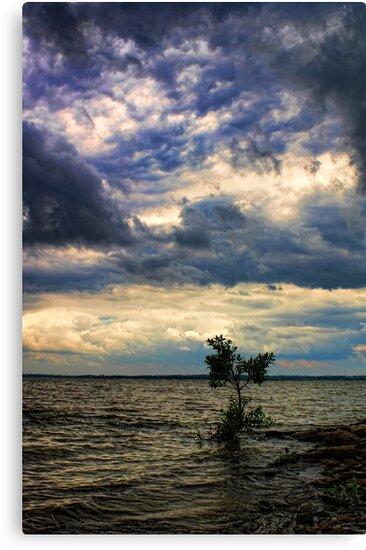 Little Tree Point by Carolyn  Fletcher