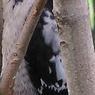 Woodpecker V by ArtOfE
