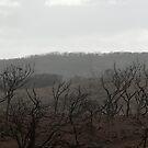 Margaret River Bushfire 2012 by palmerphoto