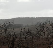 Margaret River Bushfire 2012 by palmerphoto