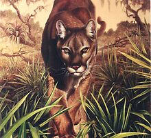Florida Panther by Hans  Droog