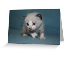 Cute kitty II Greeting Card