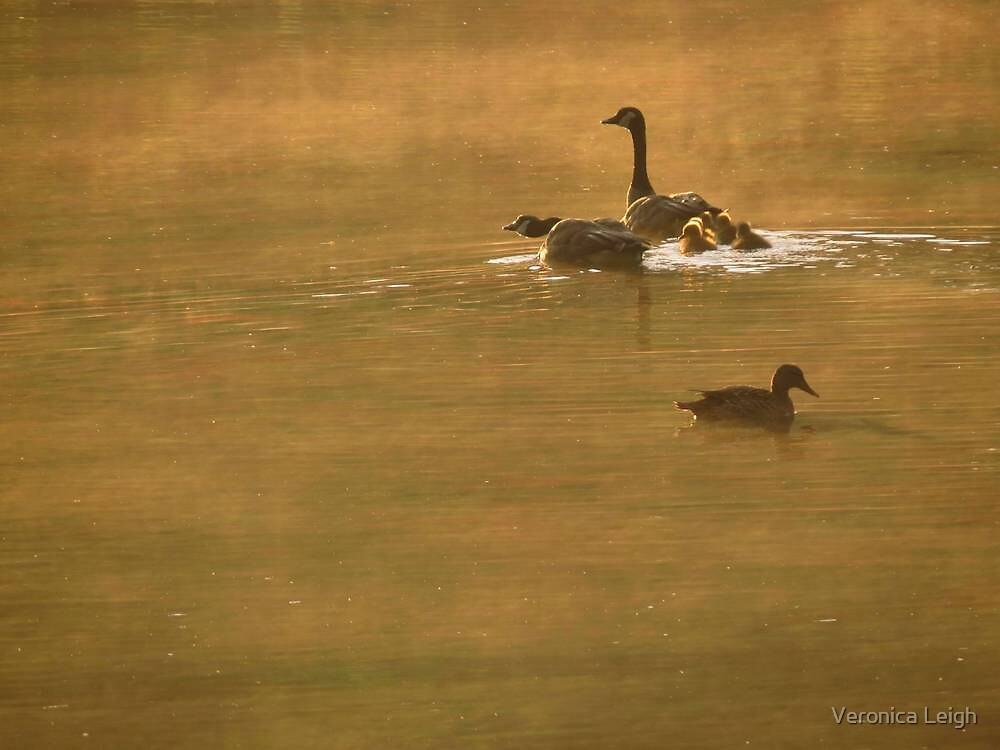 Foggy Morning Swim by Veronica Schultz