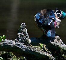 Wood Duck Pruning by imagetj
