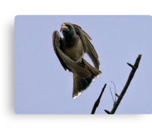 Ugly Birds Can Fly And Look Good ! Canvas Print