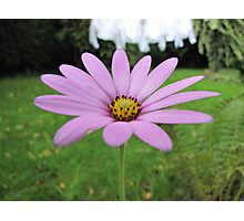 Flower in the Garden Photographic Print
