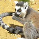 Baby Lemur by Fattom25