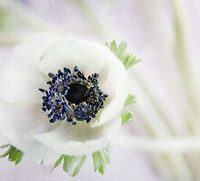 anemone by Ingz