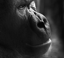 Pondering... by Theresa Elvin