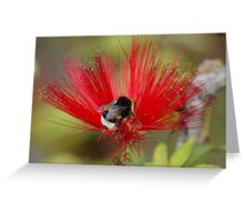 Busy Bumble Bee in a Silk Flower Greeting Card