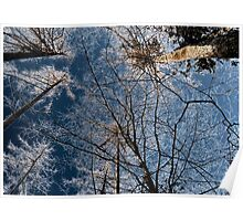 Trees grow to the sky - ice crystals Poster