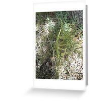 Wild asparagus Greeting Card