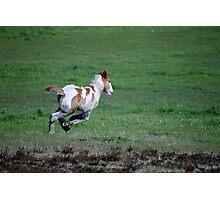 Run Like the Wind Photographic Print