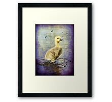 Quiet and calm Framed Print