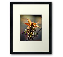 Leaf Protector at Sunset Framed Print