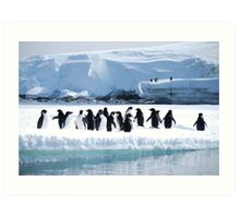 Adelie Penguin Group - Antarctica Art Print