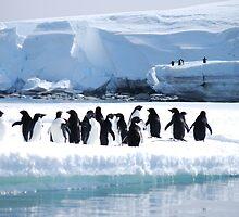 Adelie Penguin Group - Antarctica by cactus82