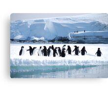 Adelie Penguin Group - Antarctica Canvas Print