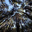 Beautiful Tasmania - Treetops by georgieboy98