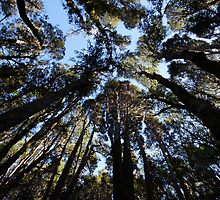 Beautiful Tasmania - Treetops by georgieboy98
