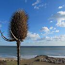 She Sells Teasel on the Seashore by Ian Ker