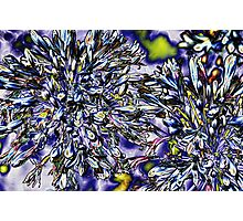 Solarized Agapanthus Photographic Print