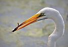 Great Egret Catching a Small Fish by Savannah Gibbs