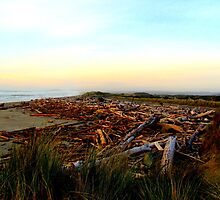 Driftwood At Bandon Beach...Bandon, Oregon by trueblvr