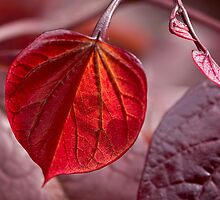 Leafing out in red by Celeste Mookherjee