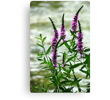 Wildflower Beauty Canvas Print