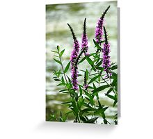 Wildflower Beauty Greeting Card