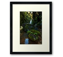 Kaiate baby ferns Framed Print