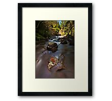 Kaiate copper ferns Framed Print