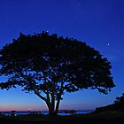 Twilight Tree  by Kristi Harkins