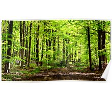 Beech Woods 2 Poster