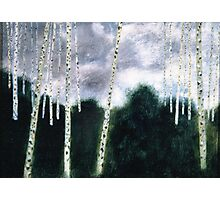 White aspens in green  forest Photographic Print