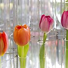 Test tube tulips by papillonphoto